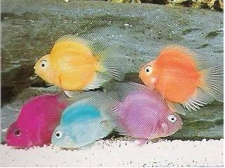expérience couleur poisson red parrot