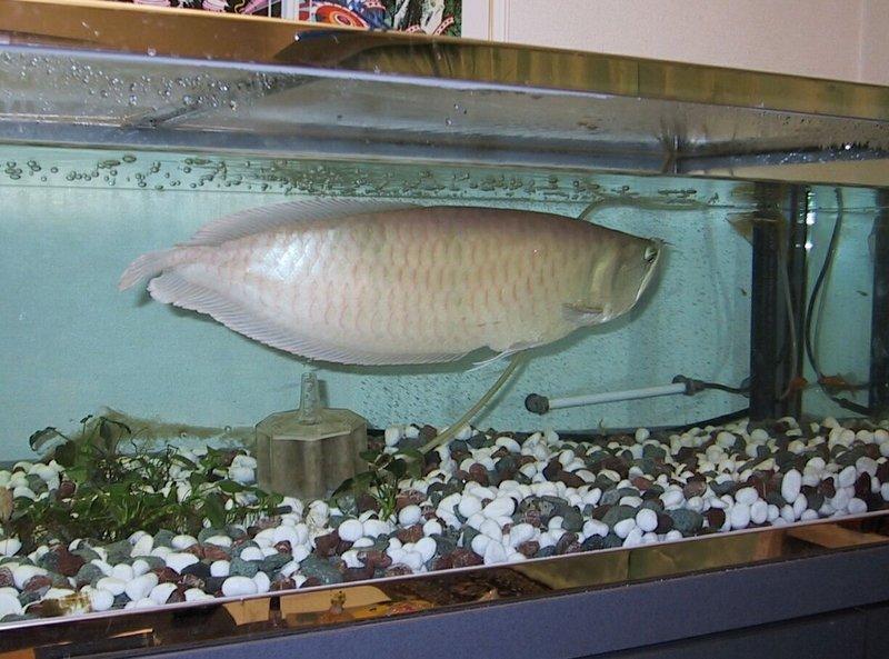 P ne les achetez plus l 39 aquarium de cab65 for Aquarium rond prix