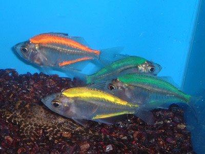 glassfish1.jpg
