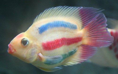 F) – NE LES ACHETEZ PLUS ! | L'aquarium de cab65