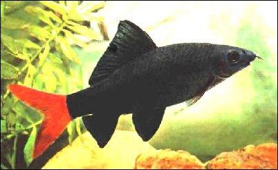 P ne les achetez plus l 39 aquarium de cab65 for Poisson eau chaude aquarium