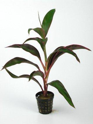 pflanze691.jpg