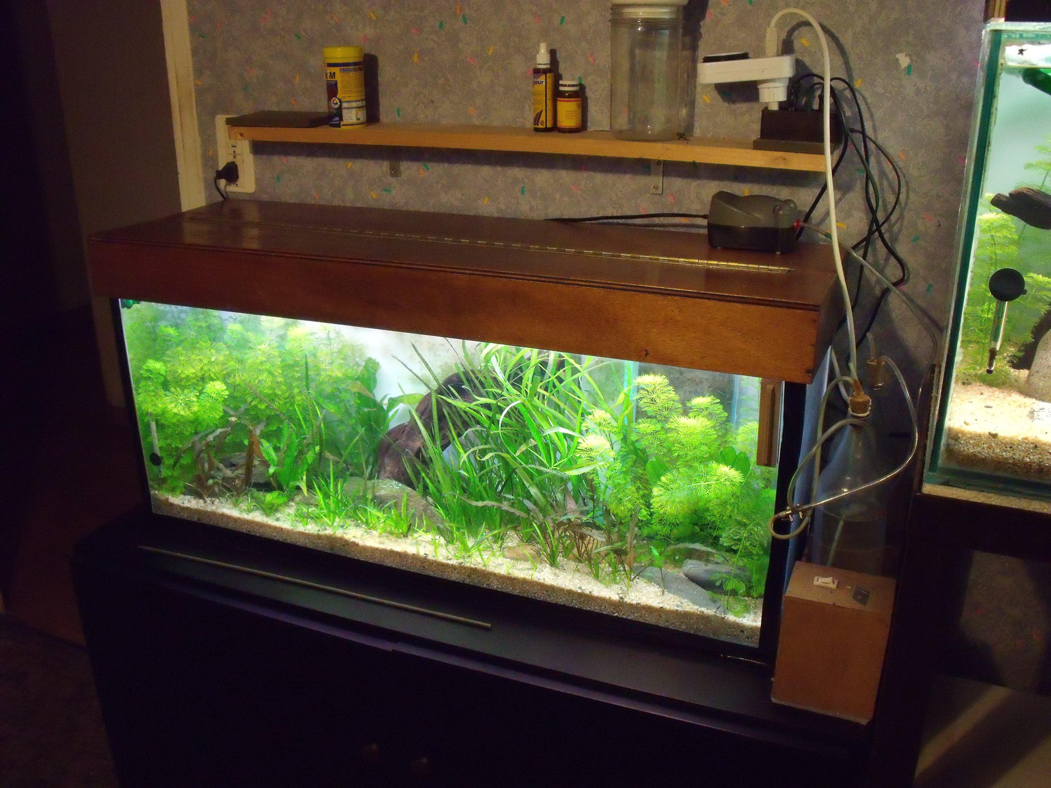 9 120 litres pour des carinotetraodon travancoricus 183 l aquarium de cab65