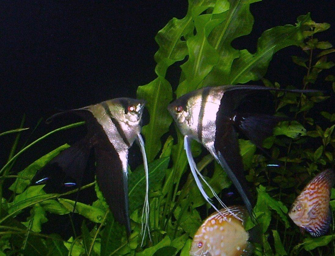 p ne les achetez plus l 39 aquarium de cab65. Black Bedroom Furniture Sets. Home Design Ideas