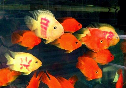 http://cab65.a.c.f.unblog.fr/files/2010/10/chinafish1.jpg
