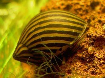 c les escargots dans l aquarium 183 l aquarium de cab65